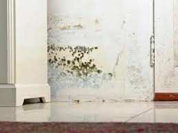 mold damage charlottesville va